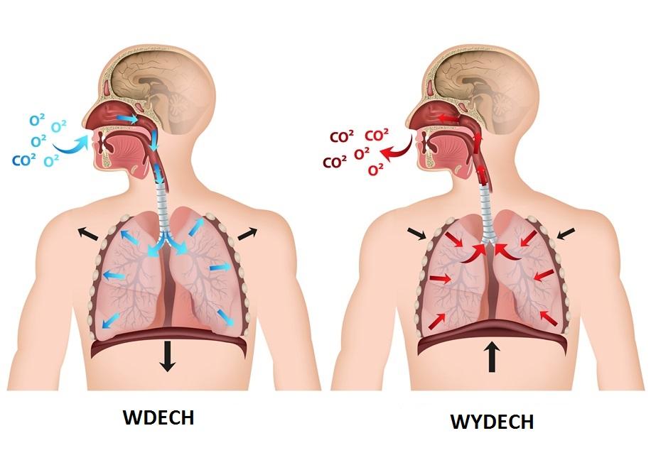 Prosty schemat oddychania z tlenem i dwutlenkiem węgla w tle.