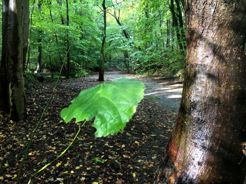 Ścieżka w sopockim lesie przy Operze Leśnej w deszczowy dzień